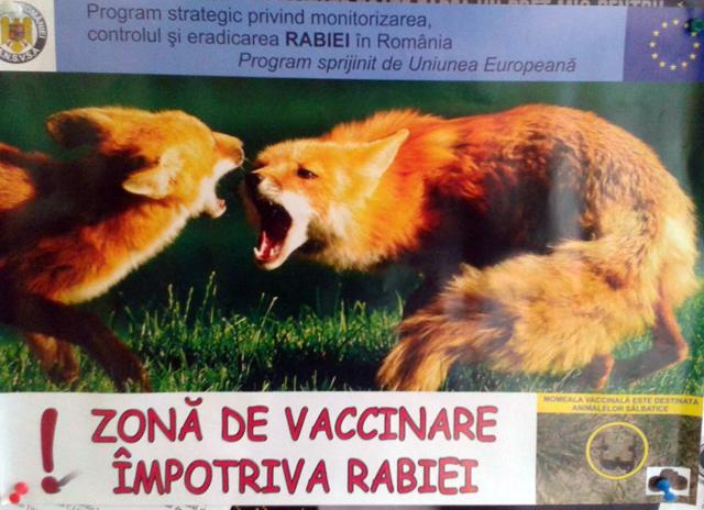 vaccin vulpi (1)